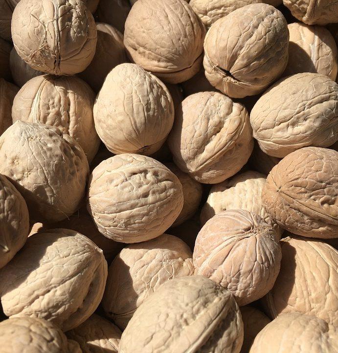 Ořechy si můžeme vypěstovat sami